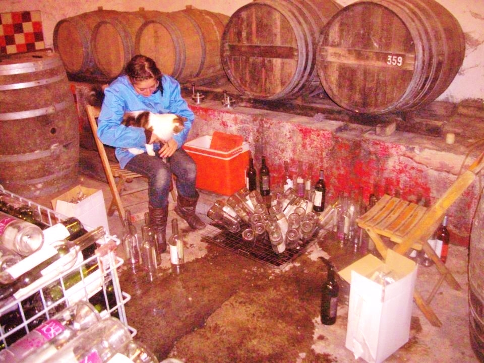 Many volunteers on organic grape farms in Provence pass their days weeding withering vines and emptying casks upon casks of old wine as local vignerons become bankrupted and no longer able to make their living in the wine industry.
